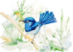 Open Canvas artist Yvonne Arnott Superb Blue Wren