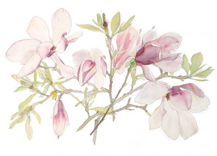 Irene Jacob magnolia