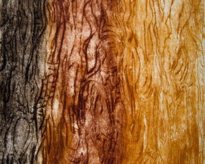 Bark Impressions series
