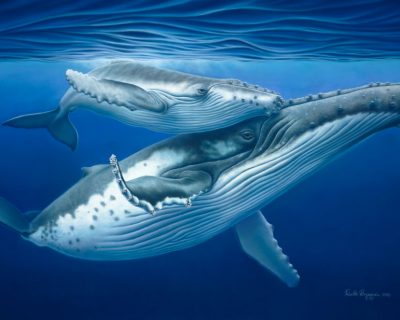 Humpback Mother & Calf