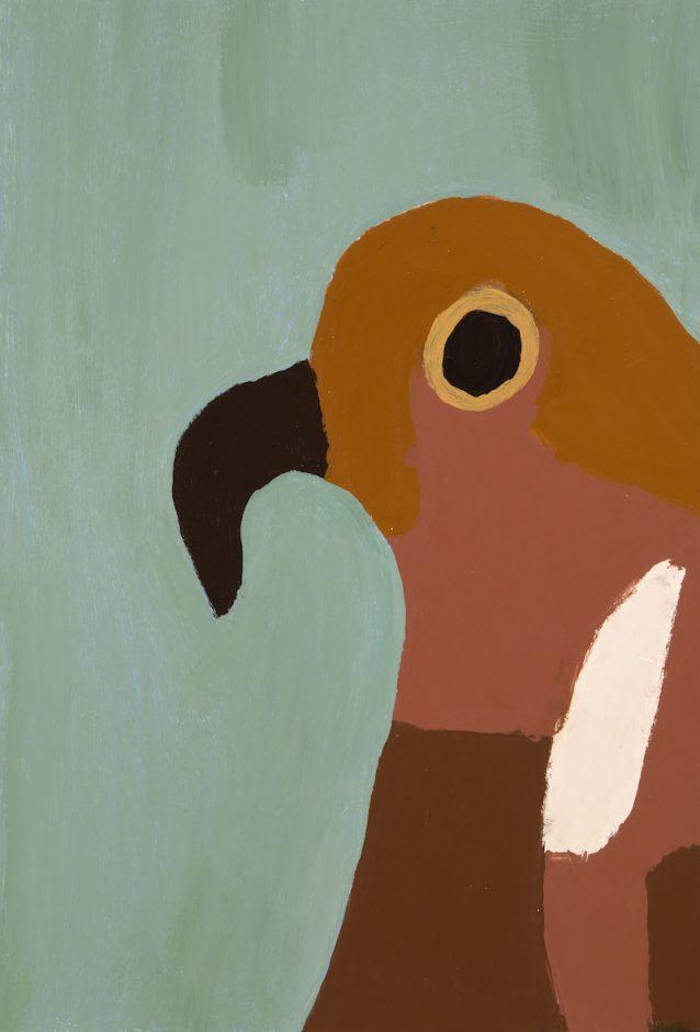 PF parrot